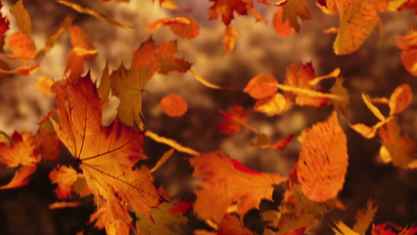 Close up on falling autumn leaves