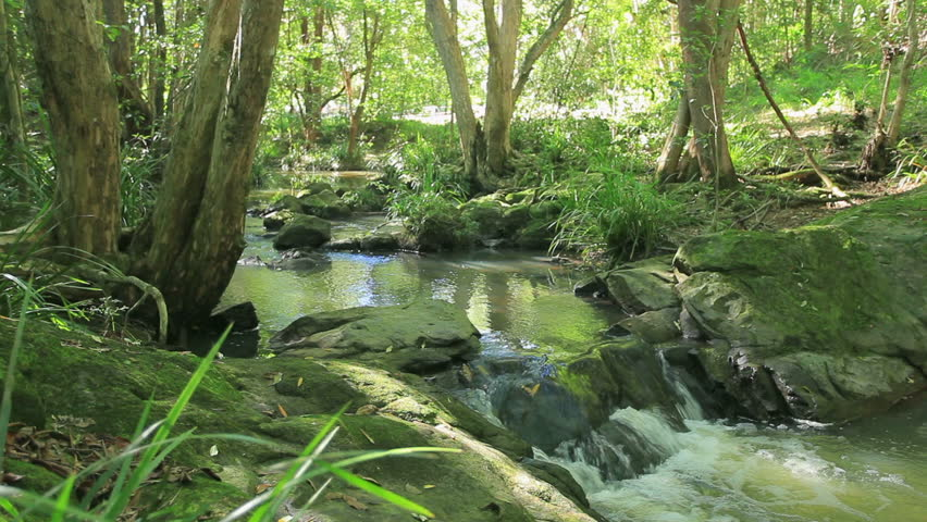 Rainforest with stream flowing through it in Queensland Australia.
