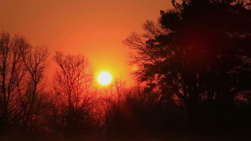 Beautiful  sunrise in the wood.Timelapse | Shutterstock HD Video #3753488