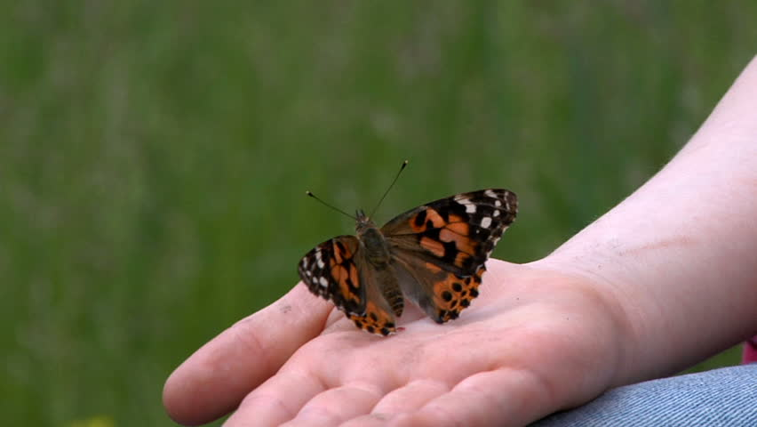 Butterfly in child's hands