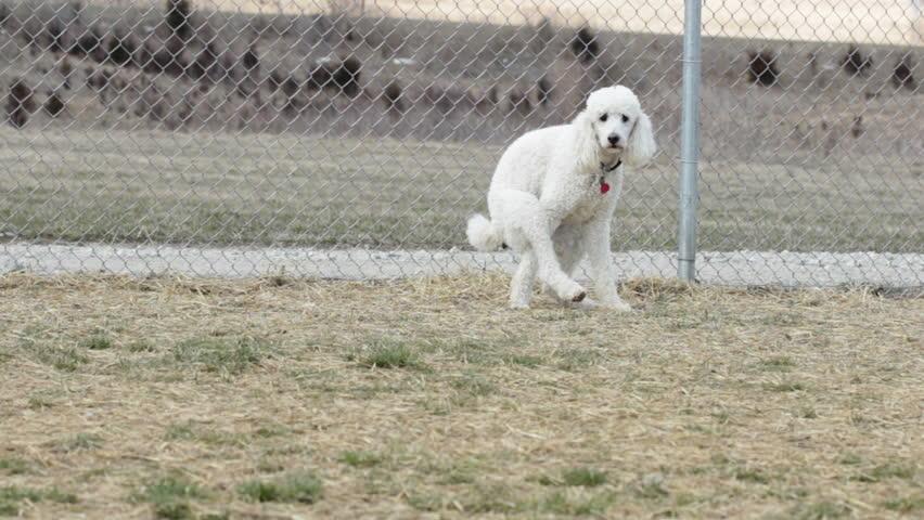Using bathroom in dog park