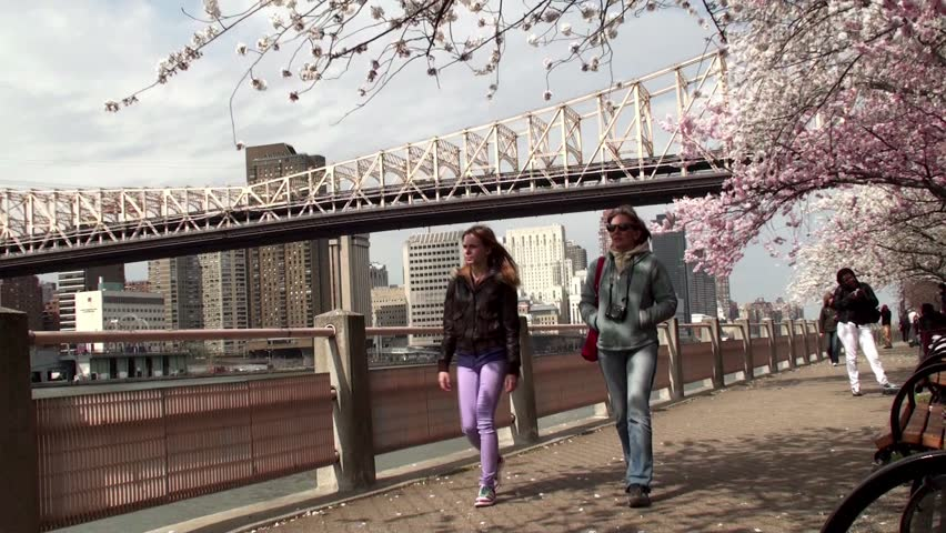 Walk along the promenade Roosevelt Island with cherry blossoms, NYC.