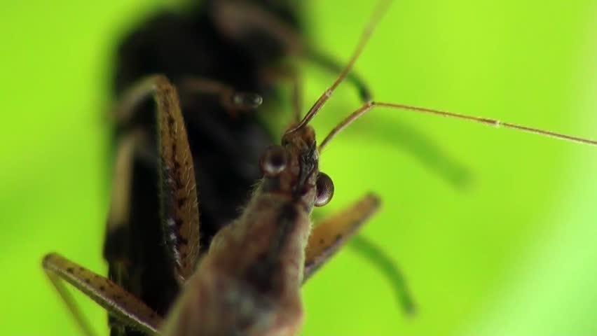 Slimy mosquito sucks blood   Shutterstock HD Video #3924251