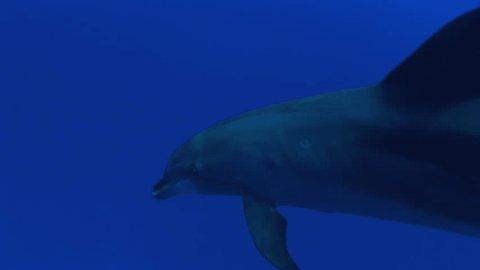 dolphin close up shot