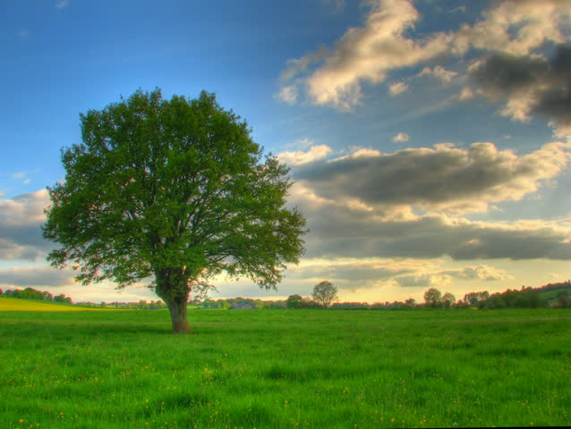 Lonely tree in green prairie, HD time lapse clip, high dynamic range imaging