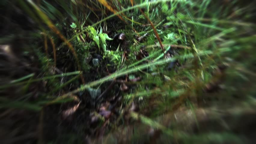Run through the woods pov