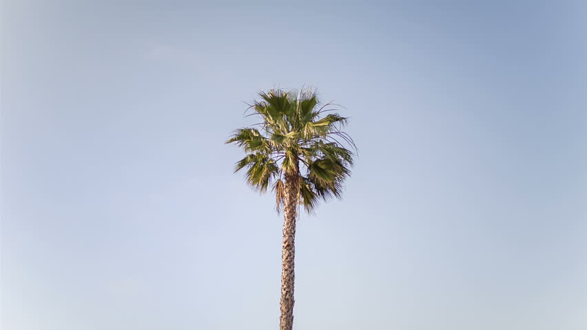 Header of palm tree