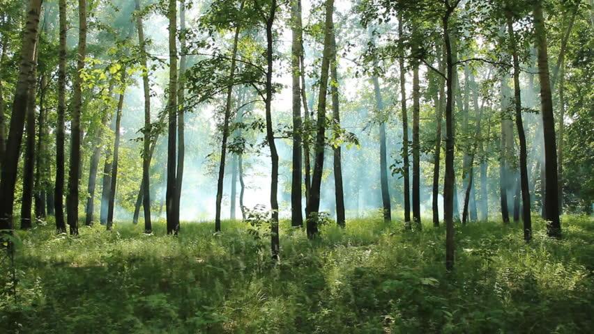 Forest fire  | Shutterstock HD Video #4066951