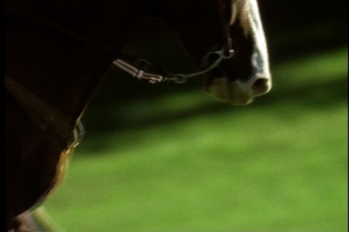 Legs and head of horse as it gallops in slow motion, | Shutterstock HD Video #4077553