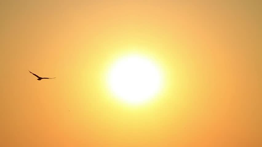 Seagull flies into the sky towards the sun. Sunset Slow Motion | Shutterstock HD Video #4100809