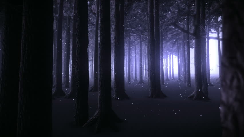 Strolling through the trunks of a forest of trees and snowy night    Shutterstock HD Video #4107673