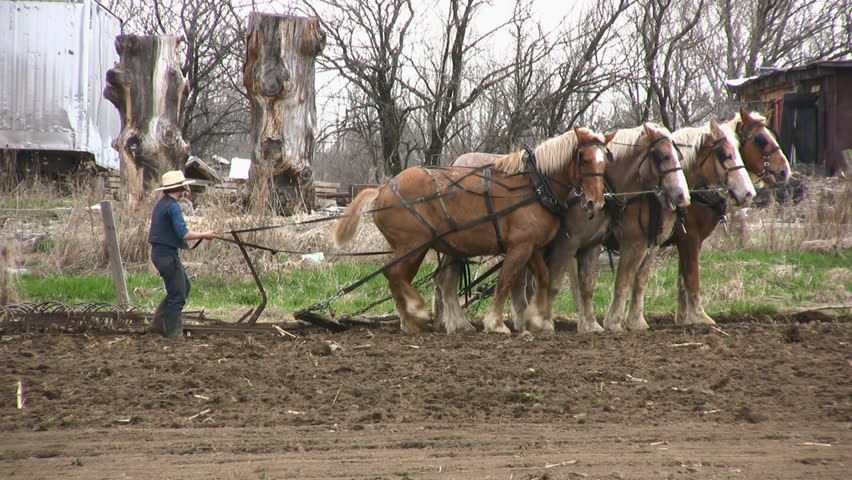 Ogdensburg, New York - April 2009: Amish Farmers Still Prepare For Spring Planting Using Horse Drawn Plow