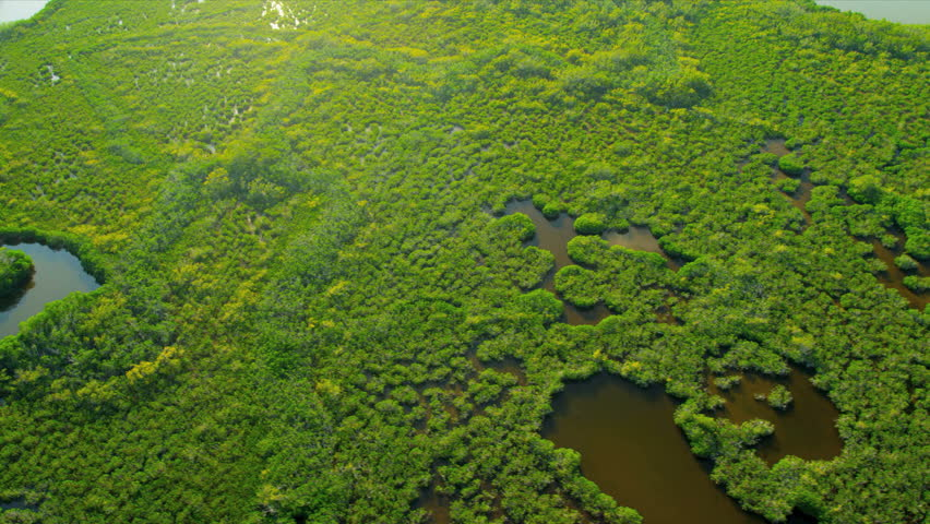 Aerial view Everglades National Park swamps and Wetlands the largest Sub tropical region in Southern Florida, USA, RED EPIC