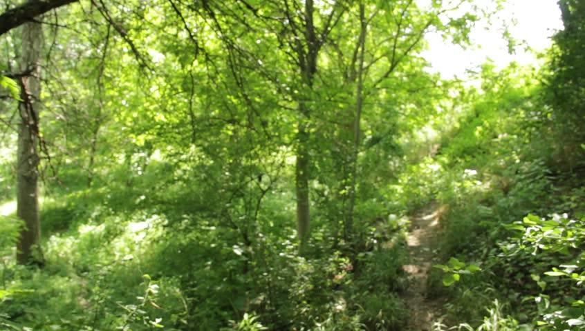 Lane in forest | Shutterstock HD Video #4208980