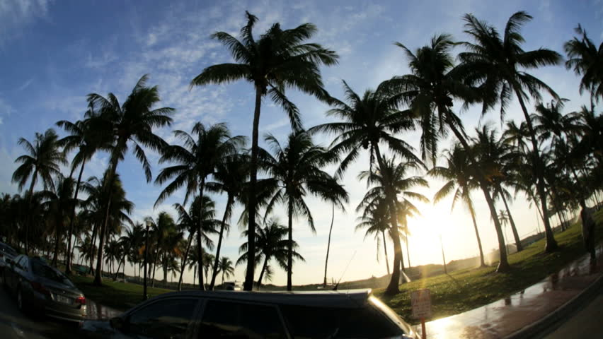 Miami - January 2013: Driving in the tropical sunlight past swaying Palm trees Ocean Drive Miami, Florida, USA