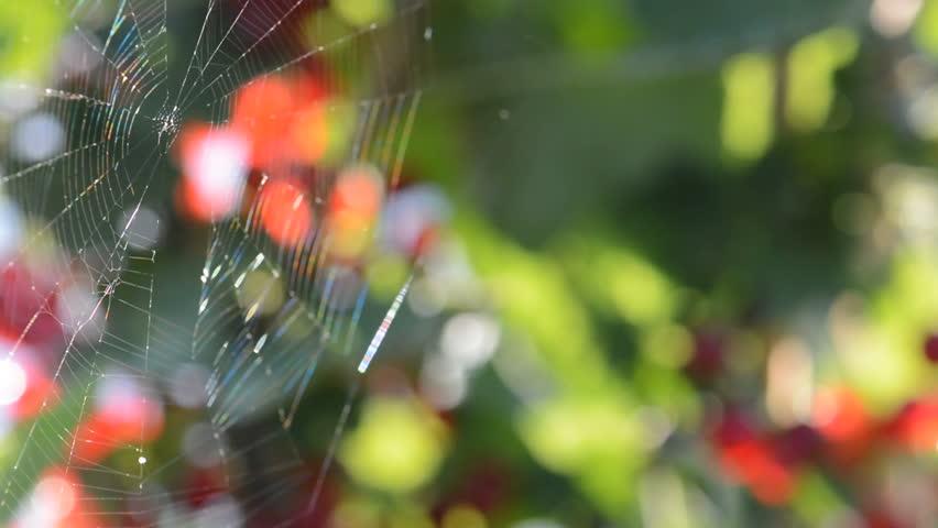 The very gentle breeze blowing to spiderweb. | Shutterstock HD Video #4290512