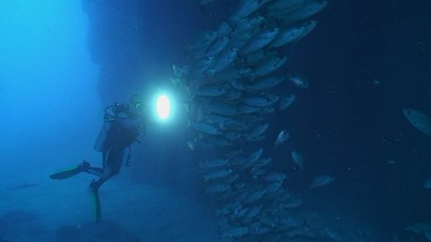 scuba diver in cave close to schooling fish using torch