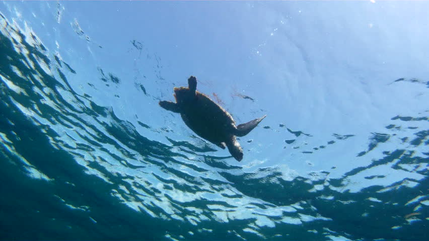 Underwater shot of a Sea Turtle Swimming From The Surface   Shutterstock HD Video #4358786