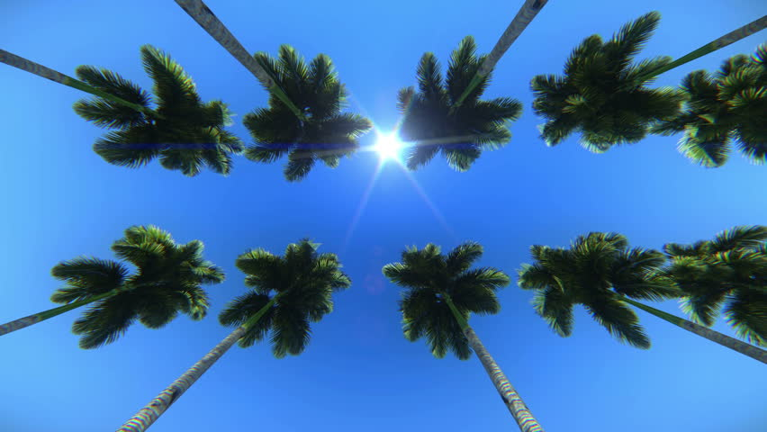 Palm trees seen from below
