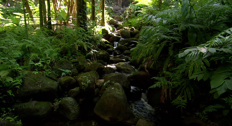 A small stream babbles over rocks in a dense Hawaiian forest