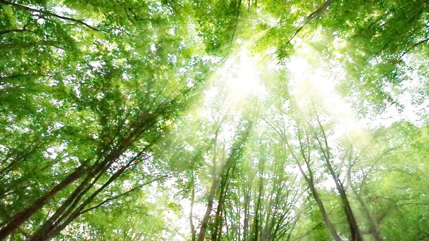 In forest | Shutterstock HD Video #4499597