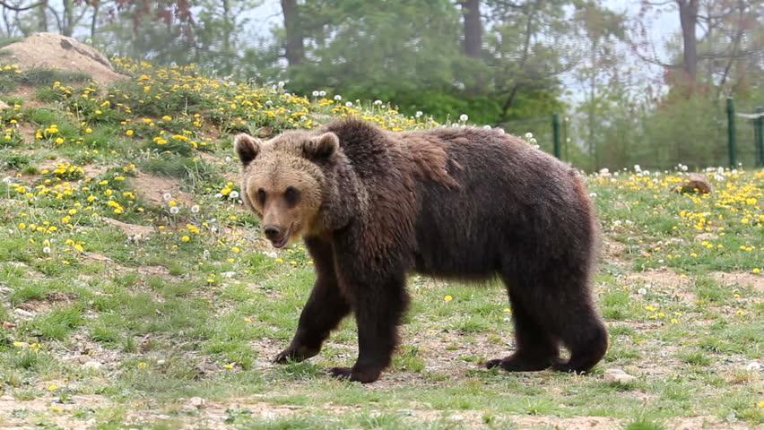 Big brown bear in zoo park #4520309