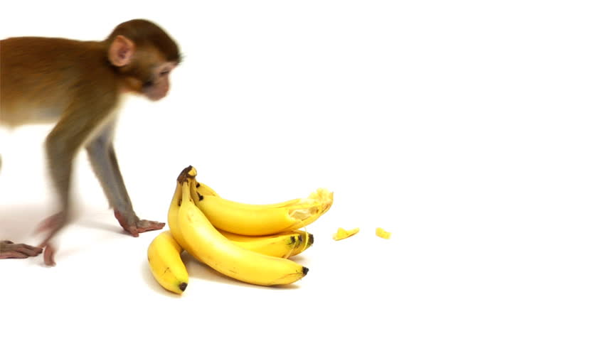 обезьяна с бананами в картинках субботу вечером союз