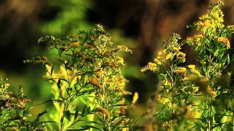 Beautiful flowers in warm sunlight. Full HD footage. Village landscape