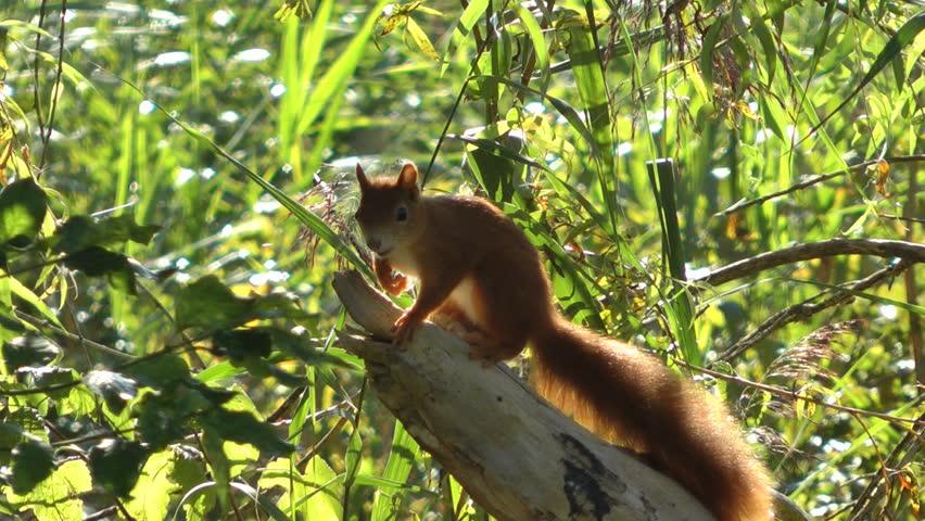 Jumping squirrel  | Shutterstock HD Video #4609622