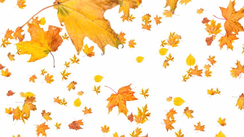 падают листья картинки для презентации цифровая камера