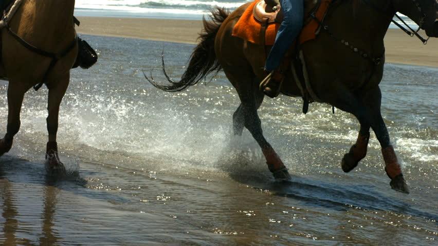 Horses running through water, slow motion | Shutterstock HD Video #4656812
