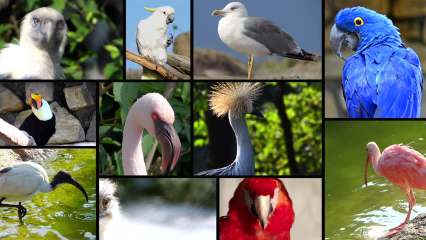 Portraits of Birds, Collage Stock Footage Video (100% Royalty-free ...