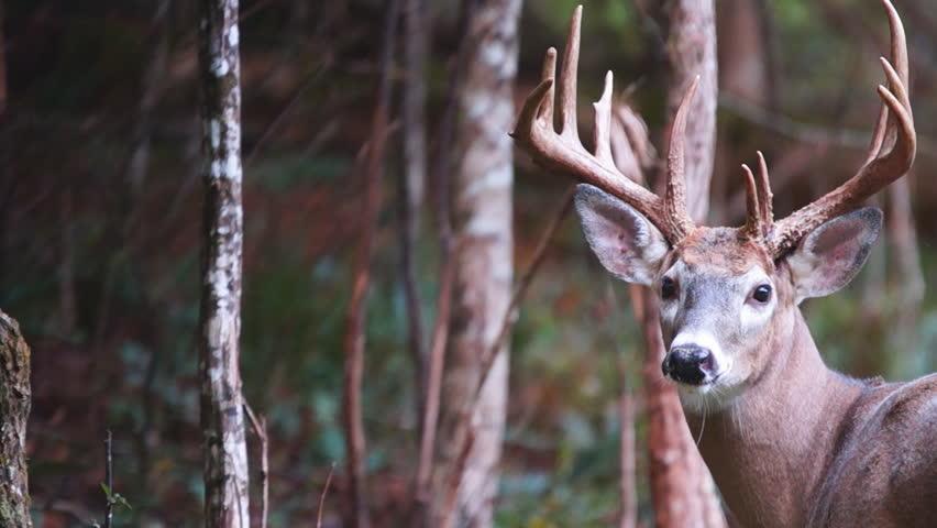 Legendary Hunter Barry Wensel Offers Advice On Killing Mature Bucks