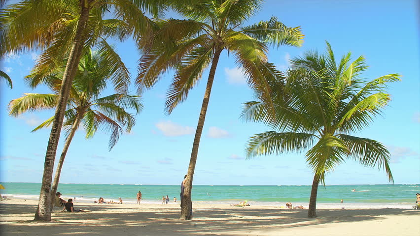 Palm trees sit on a beach with people on a clear sunny day #4733432