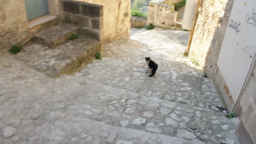 Chasing cat on cobblestones