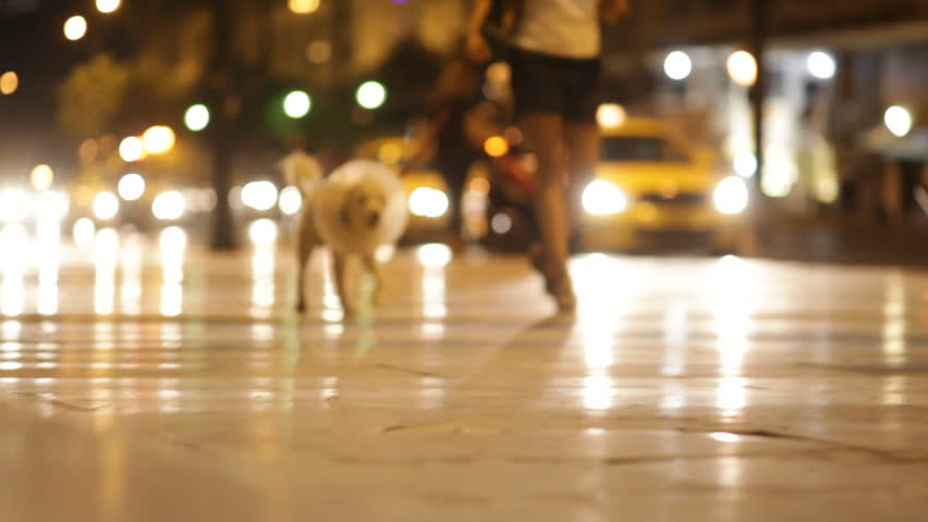 Athens, Greece - August 15th, 2012: dog in collar