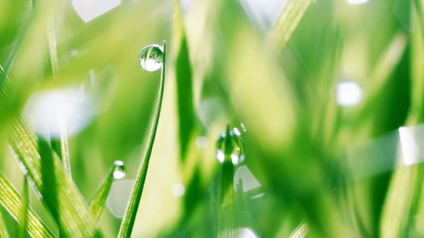 Macro shot of dew drops on green grass