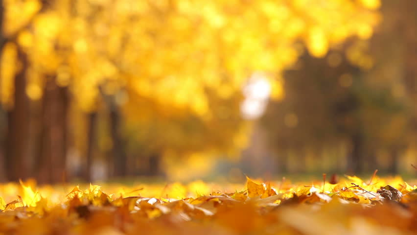 Leaf fall in the autumn city park. Beautiful background   | Shutterstock HD Video #4862993