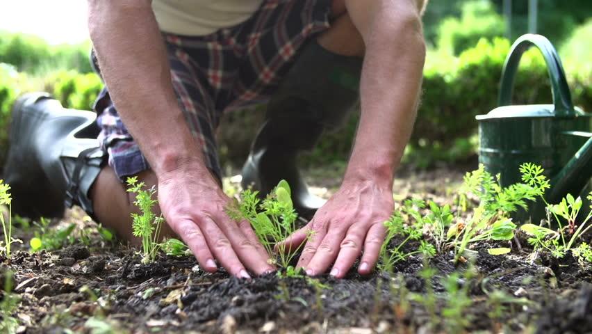 Man Plants And Waters Seedlings Stock Footage Video 100