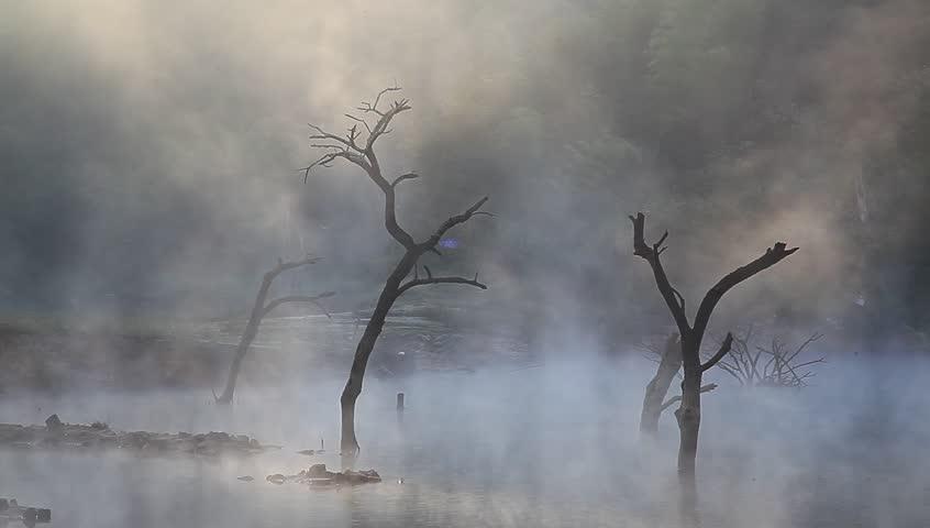 Jiulonghu Lake in Zixi, Dead tree on the lake under morning mist | Shutterstock HD Video #4880207