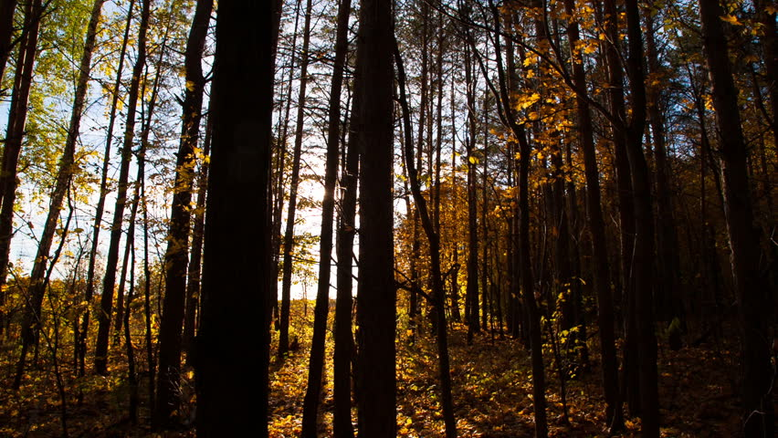 beautiful autumn forest with sun shining - dolly shot #4908536