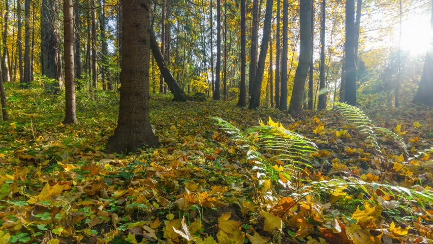 autumn forest, timelapse panorama #4913375