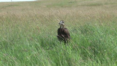 a ground horn bill with a deformed beak