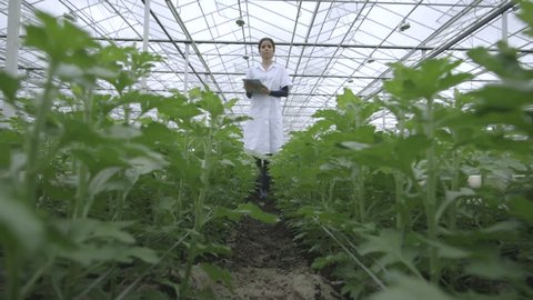 Female Scientist examining plant and using tablet in greenhouse