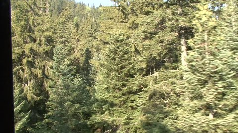 Aerial helicopter view of mountain forest and trees