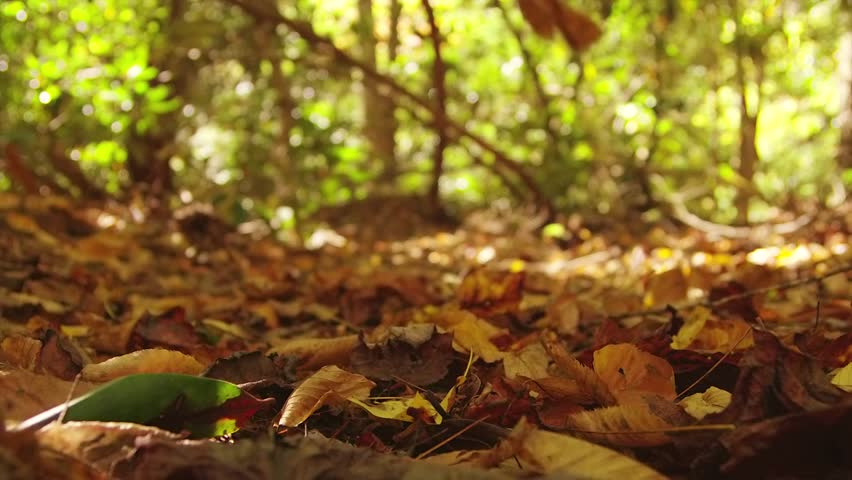 Falling autumn leaves.  Shot with Red Epic in slow motion.