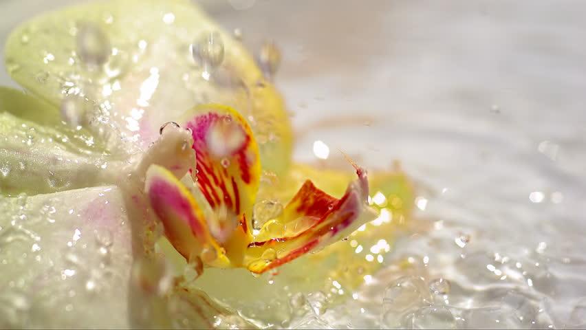 Water drops falling on yellow orchid flower, slow motion 80 | Shutterstock HD Video #4987931