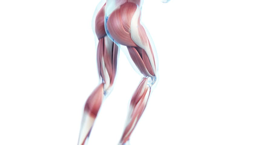 transparent jogger animation - visible muscles