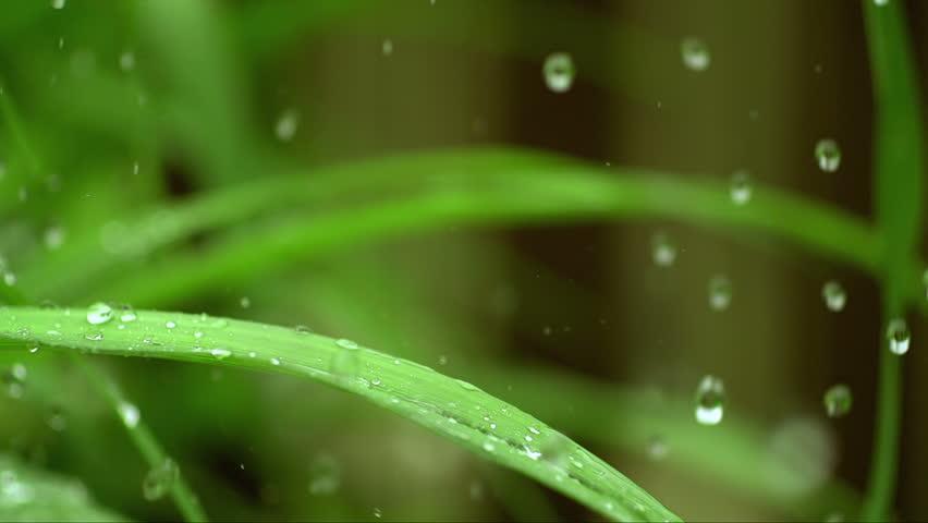 Rain water drops falling over green grass 10 #5044052
