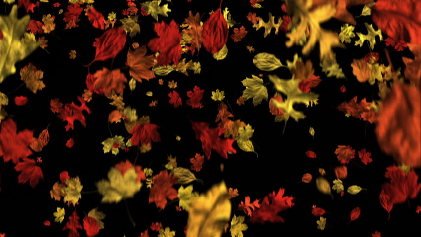 Falling leaves in stylized autumn colors drift down in a seamless loop against a black background.